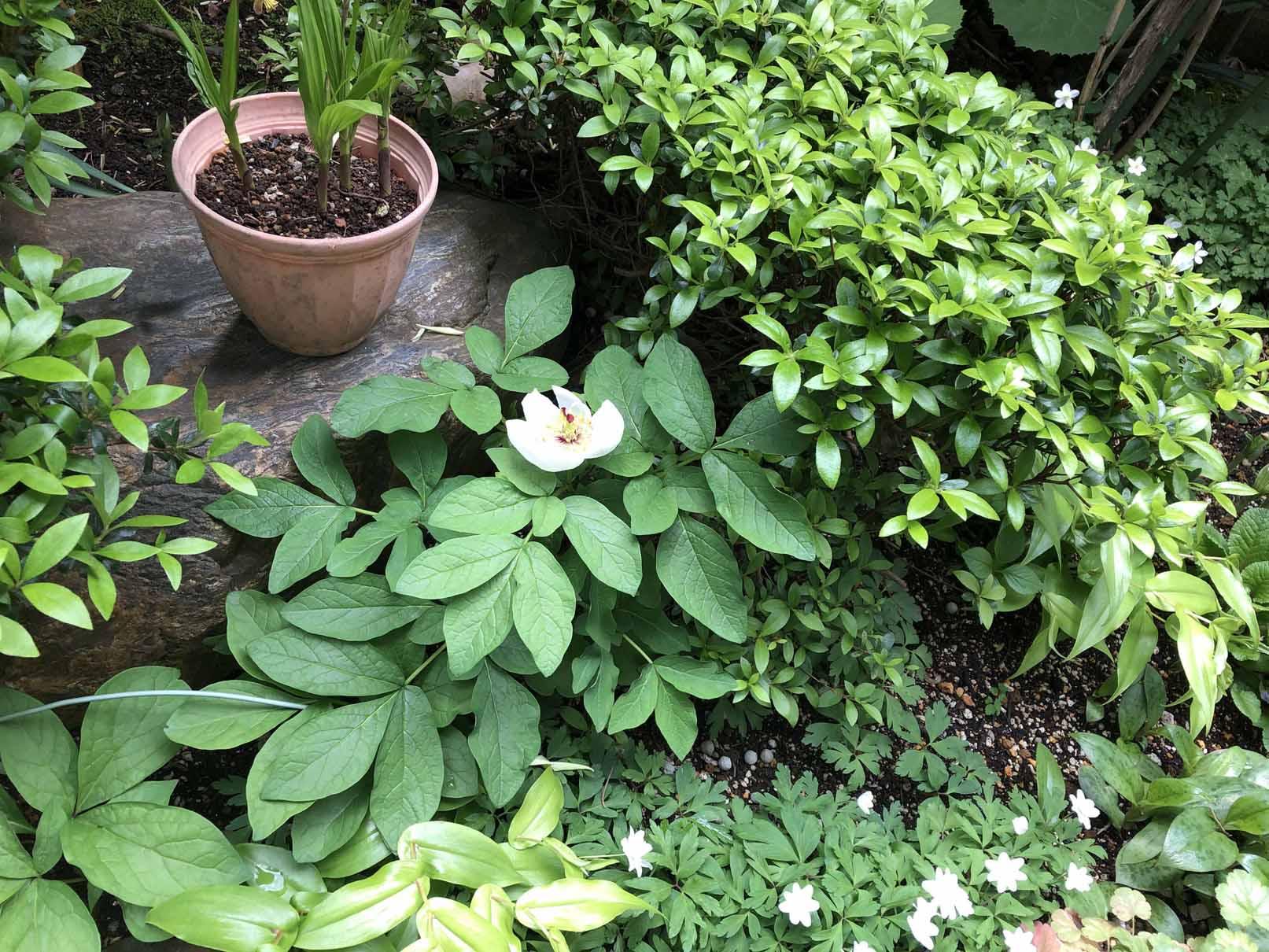 暮らしを彩る庭からの恵み~庭の役割 その1